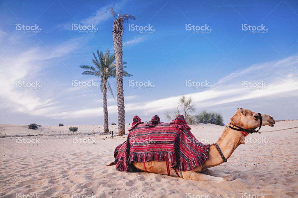 offshore společnosti v Dubaji